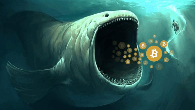Balinalar, Altcoin'ler ve Bitcoin