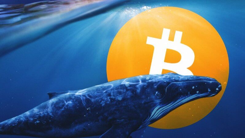 Bitcoin Balinalarının Sayısı Son İki Yılın En Üst Seviyesinde
