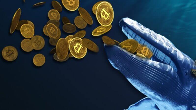 Bitcoin Balinaları Borsalardaki Fonlarını Çekiyor Mu?