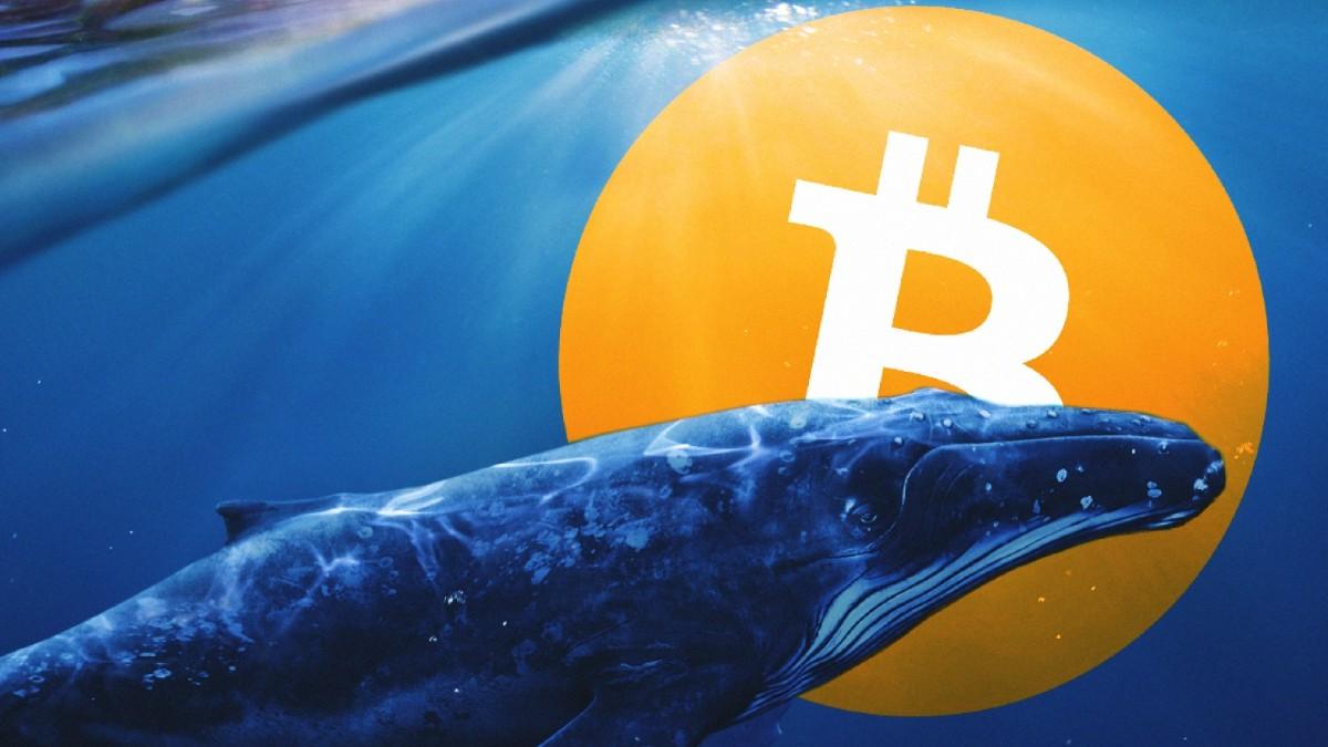 Bitcoin (BTC) Fiyatı İle Birlikte Balinalar da Hareketlendi!